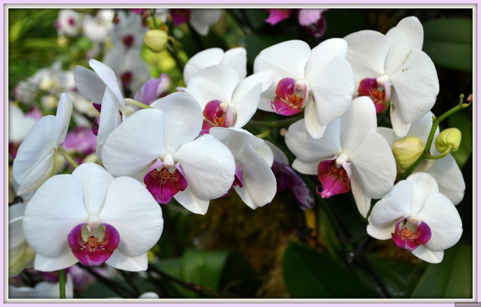 цветы с воздушными корнями фото и название
