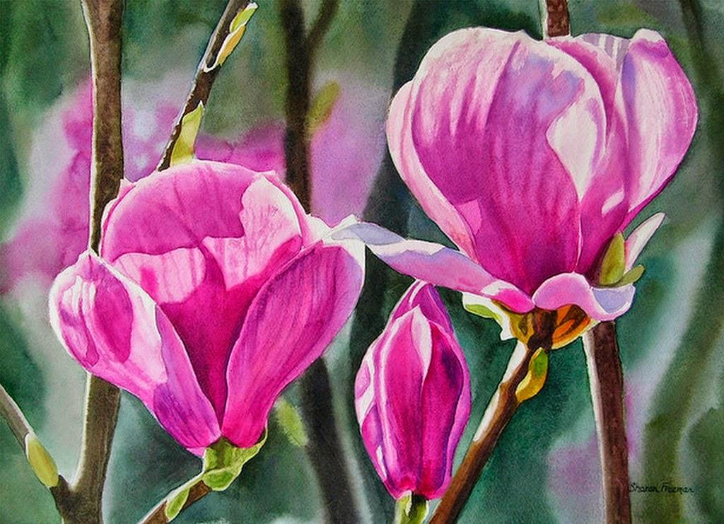 bodegones-de-flores-magnolias