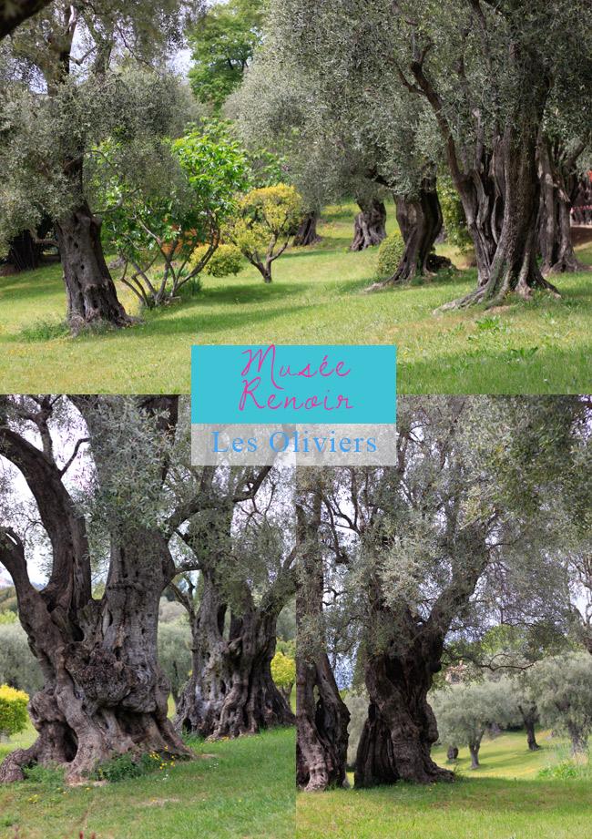 musée Renoir Cagnes sur Mer gli ulivi