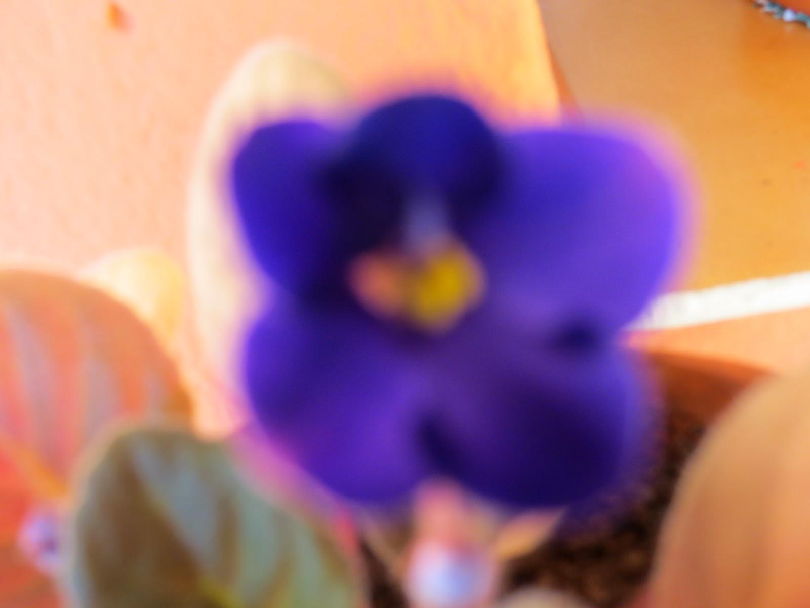 hija de violeta, Beatriz 2015