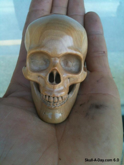 Skull a day category wood