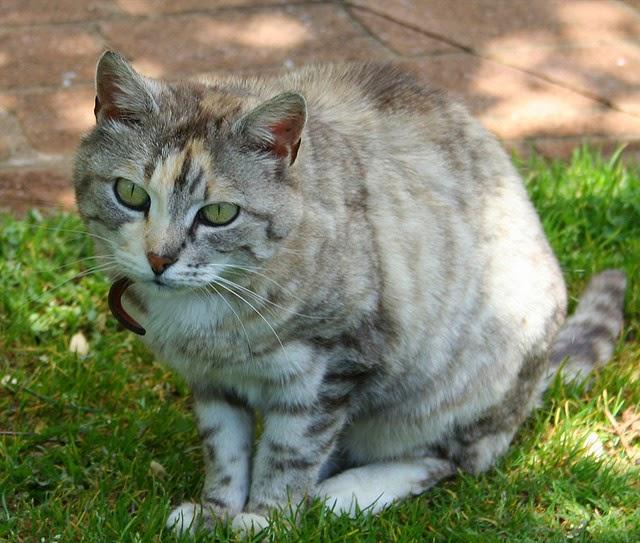 do cats get high on catnip