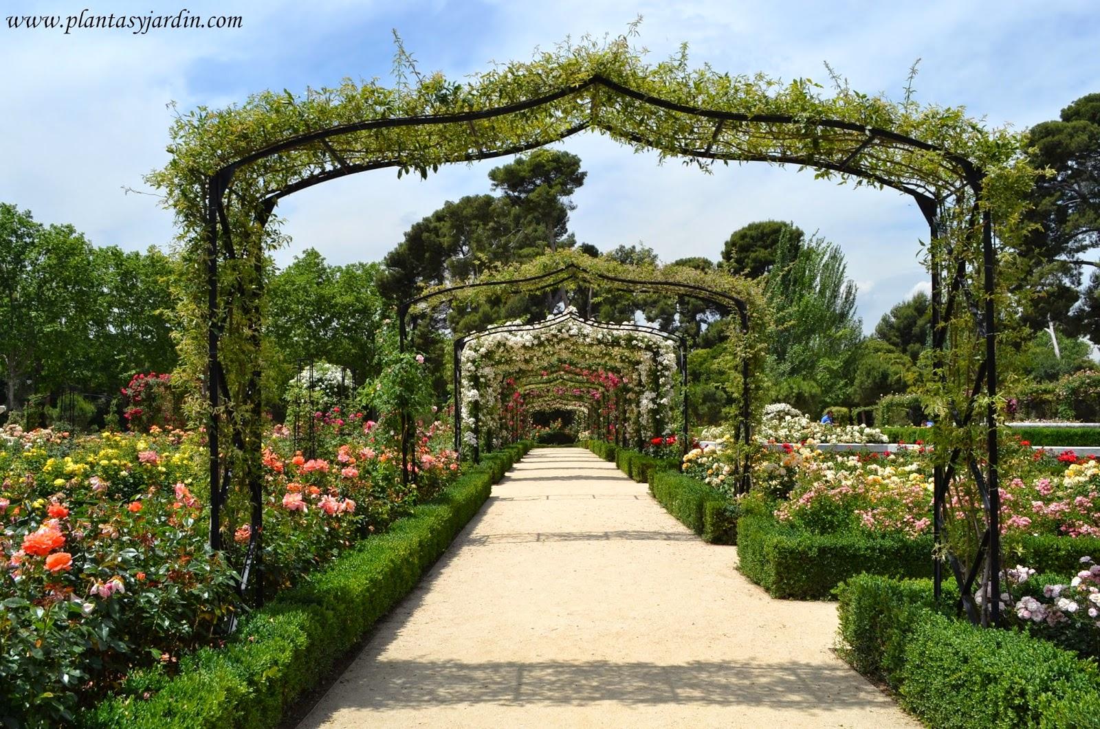 Las plantas for Jardin los rosales