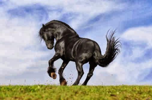 cavalo_preto