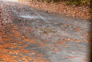 photo of driveway with leaves, robins and puddles