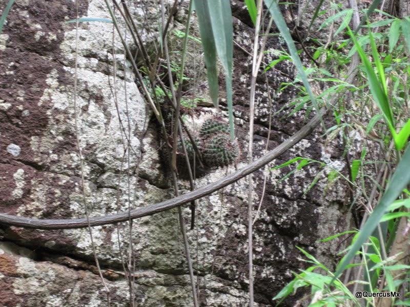 Cactus a la vista, mientras tratábamos de salir del Arroyo Hondo!