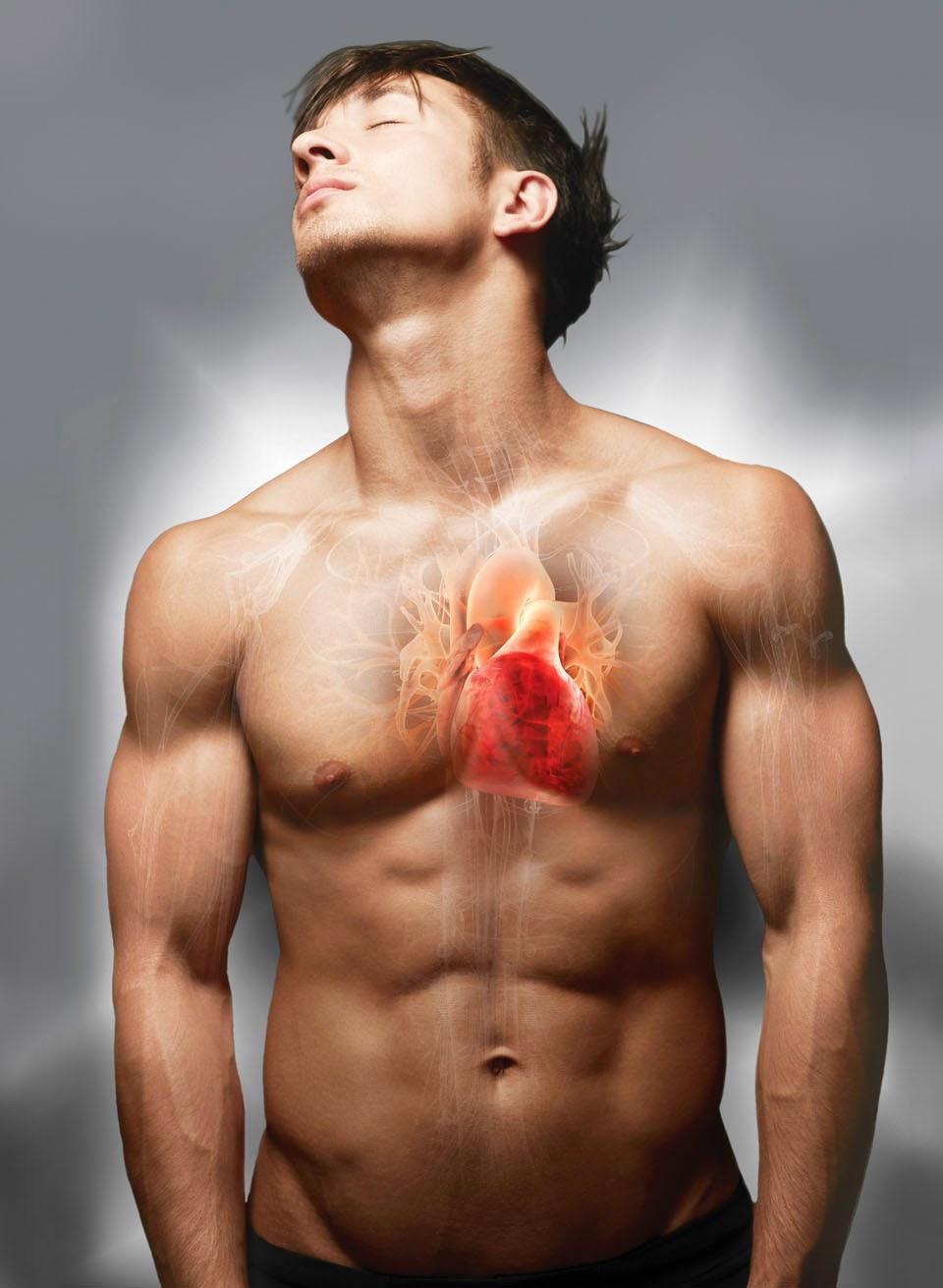 Tecnicos Radiologos: Anatomía del corazón
