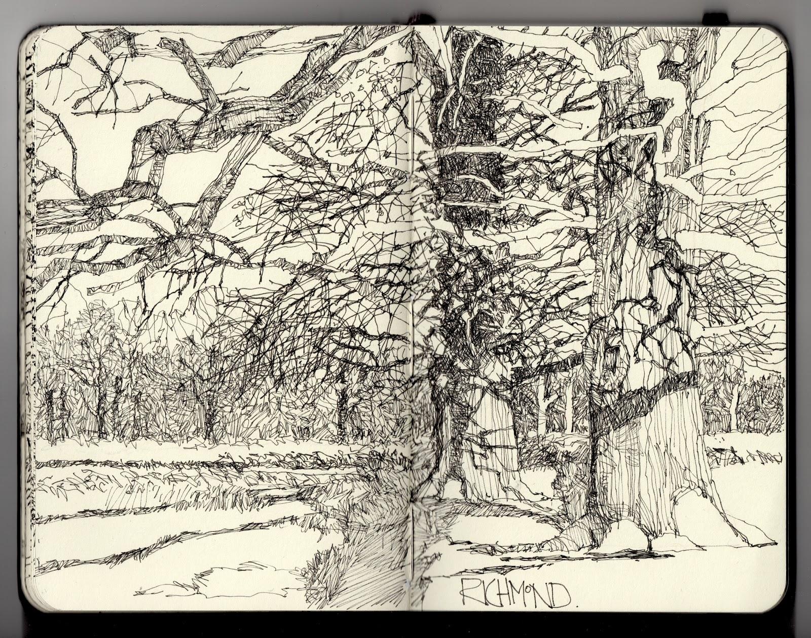 Fine Line Drawing Artists : Ian sidaway fine line winter oaks