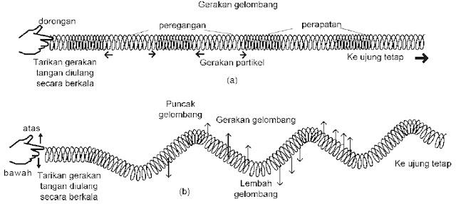 gelombang longitudinal gelombang transversal