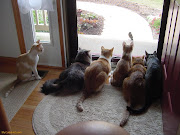 Click the Pics fo View Large Funny Pictures of Cats funny pictures of cats hanging out at the window