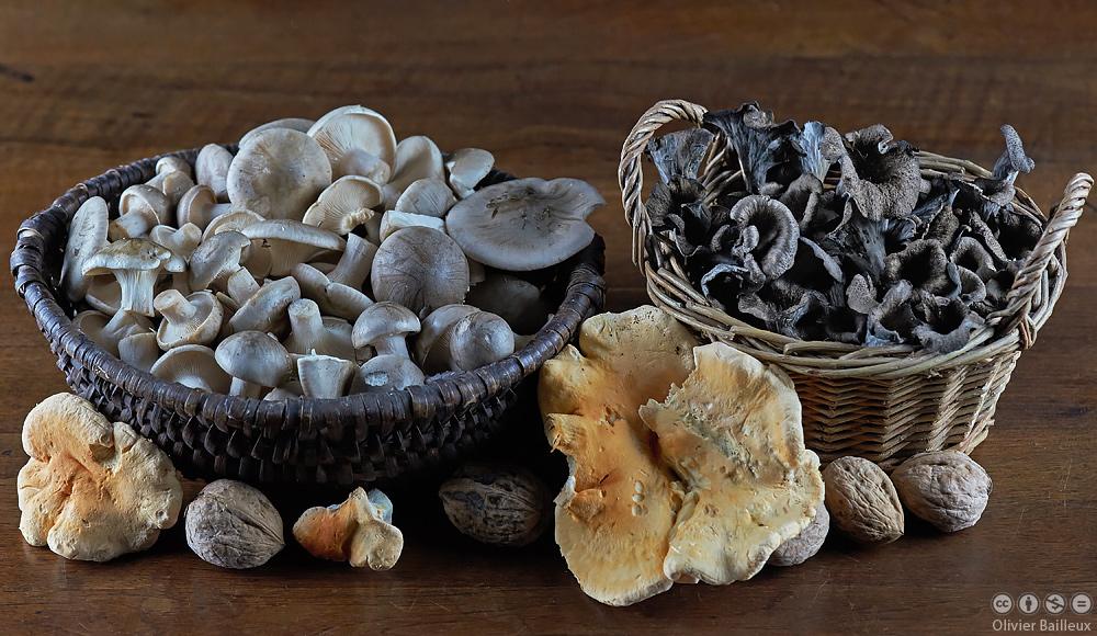 Champignons comestibles - Application pour reconnaitre les champignons ...