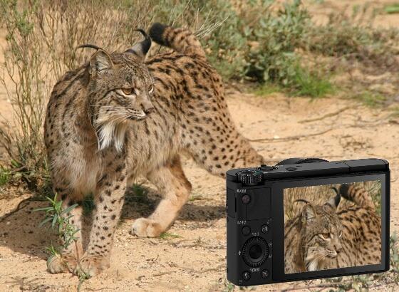 http://elblogdelalincesa.blogspot.com.es/2013/02/fotografiar-fauna-protegida-en-anaducia.html