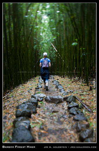 Bamboo Forest Maui7