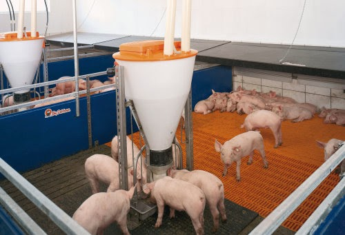 selangor-modern-pig-farm