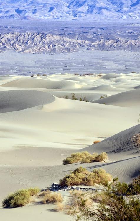 Mesquite Dunes 090