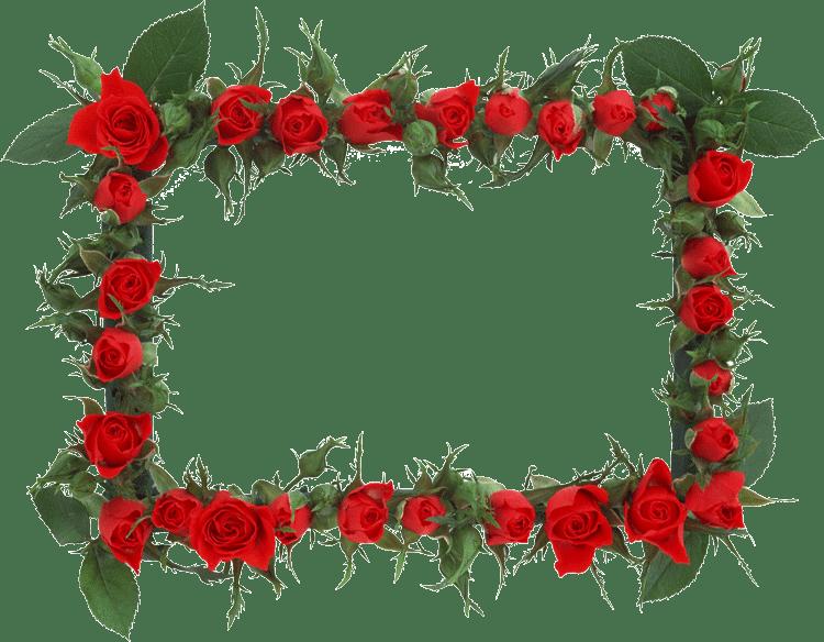 Marcos para fotos de flores - Marcos para plantas ...