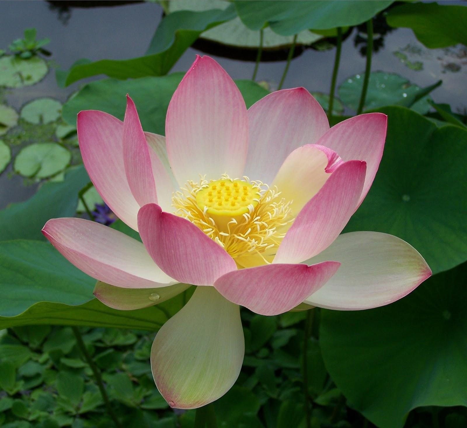Letters to a nichiren buddhist chanting nam myoho renge kyo download mp3 of gongyo and diamoku mightylinksfo