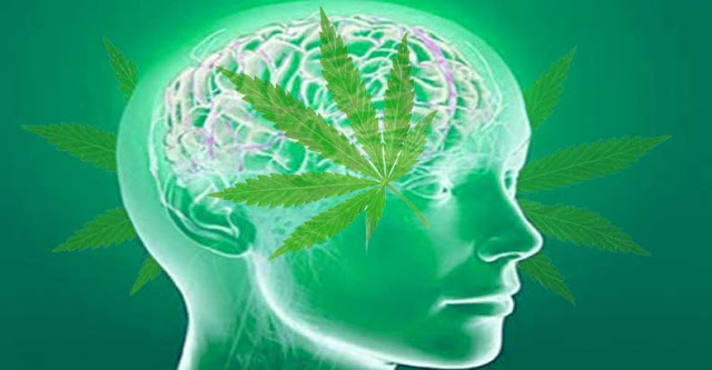 Revolutionary Study Shows Cannabis to Protect Traumatized Brains and Helps them Heal