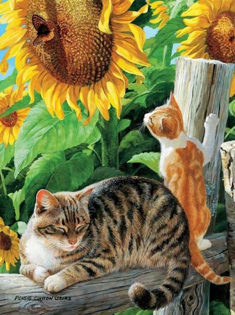 кошки и подсолнух