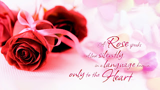 A-Rose-Speaks-of-love-pink-BG-HD-wallpaper-for-lovers-image.jpg