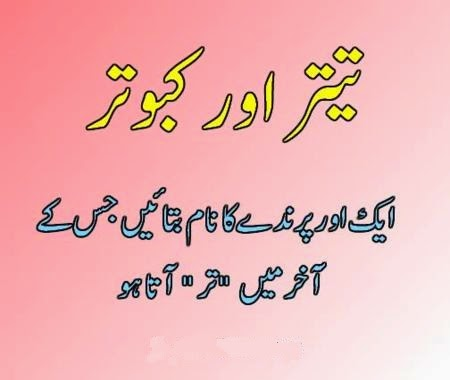 Interesting Questions To Ask In Urdu The gallery for...