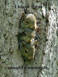Naughty Squirrels