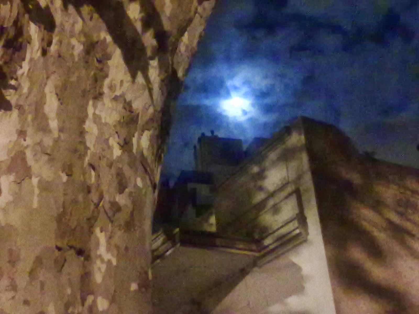 Arbol y luna - La Paternal - Buenos Aires - Argentina