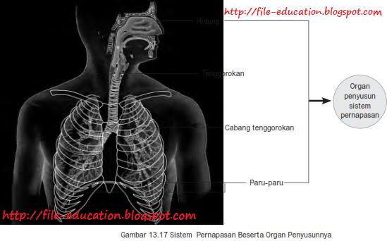 Sistem Organ Pada Tubuh Hewan Vertebrata Dan Manusia Alsen Saloka Blog S