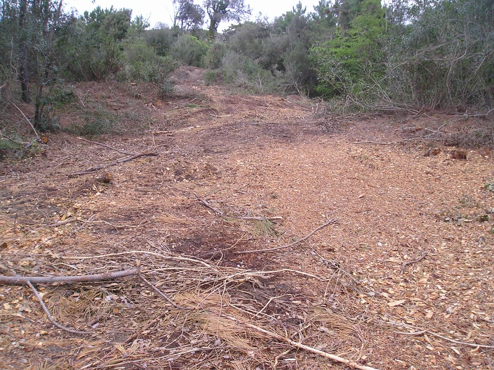 WWF Alta Toscana Onlus : ESPRIMIAMO STUPORE E RABBIA PER I TAGLI ...