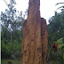 Keajaiban Musamus, Rumah Semut Raksasa di Taman Nasional Wasur
