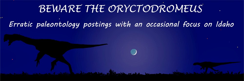 Beware the Oryctodromeus