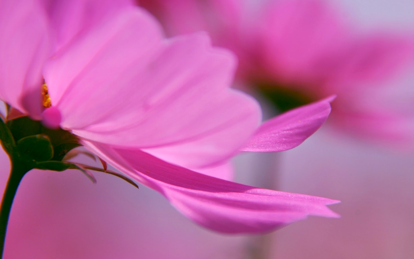 lovely hd flower wallpapers for tablet pc online fun