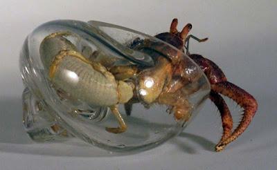caracoles de cristal para cangrejos
