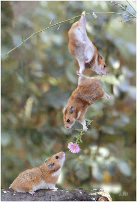 hewan jatuh cinta