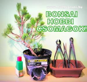 BONSAI HOBBI CSOMAG - KATT A KÉPRE!
