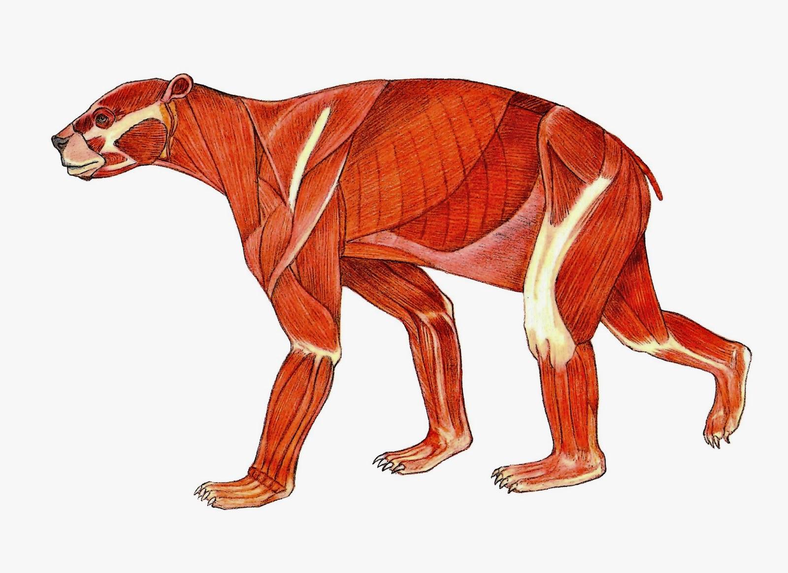 EL OSO ANDINO - RED OSO ANDINO: Reconstrucción del oso prehistórico ...