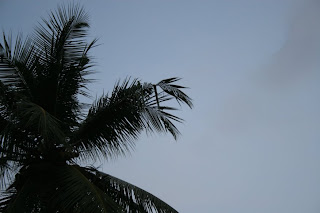 Oiseaux Sri Lanka