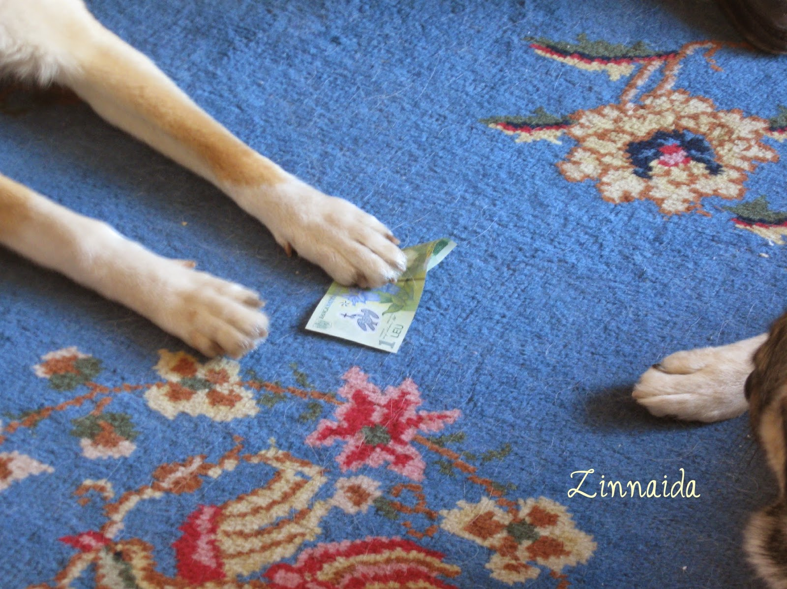 instinct-de-proprietate-la caini