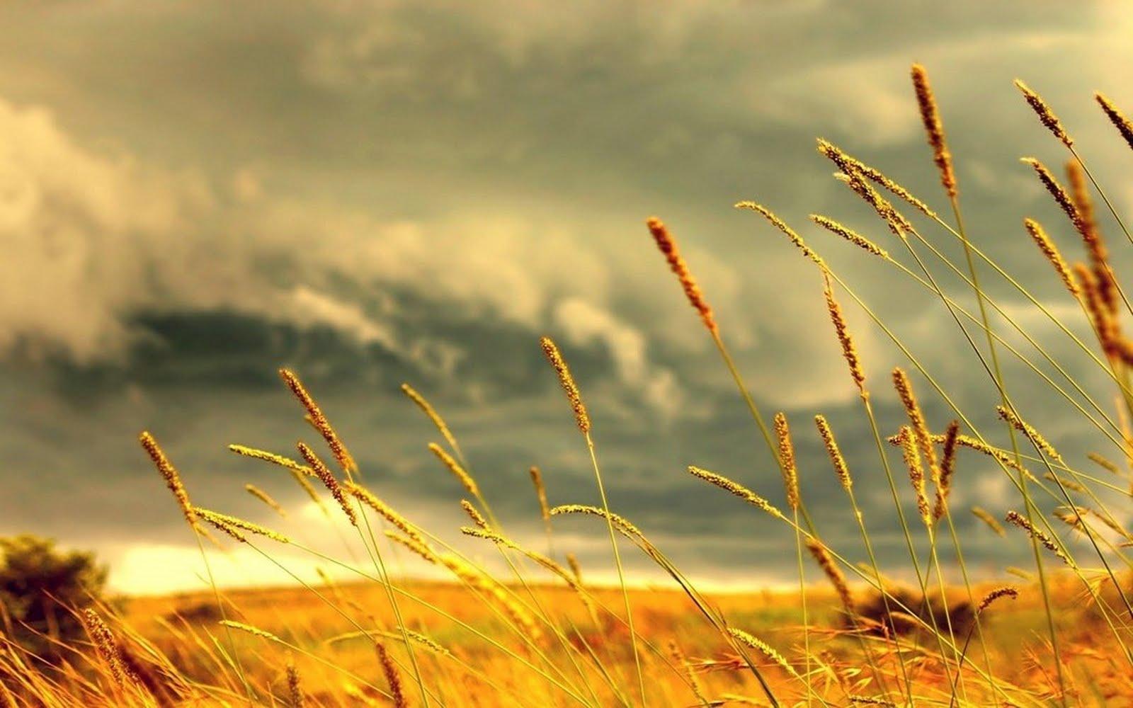 http://2.bp.blogspot.com/-EEAA8xuLr6s/Tle_UNGN03I/AAAAAAAAGo4/Egab7-sXZ5U/s1600/Nature+Widescreen+HD+Wallpaper+1680+X+1050+36.jpg