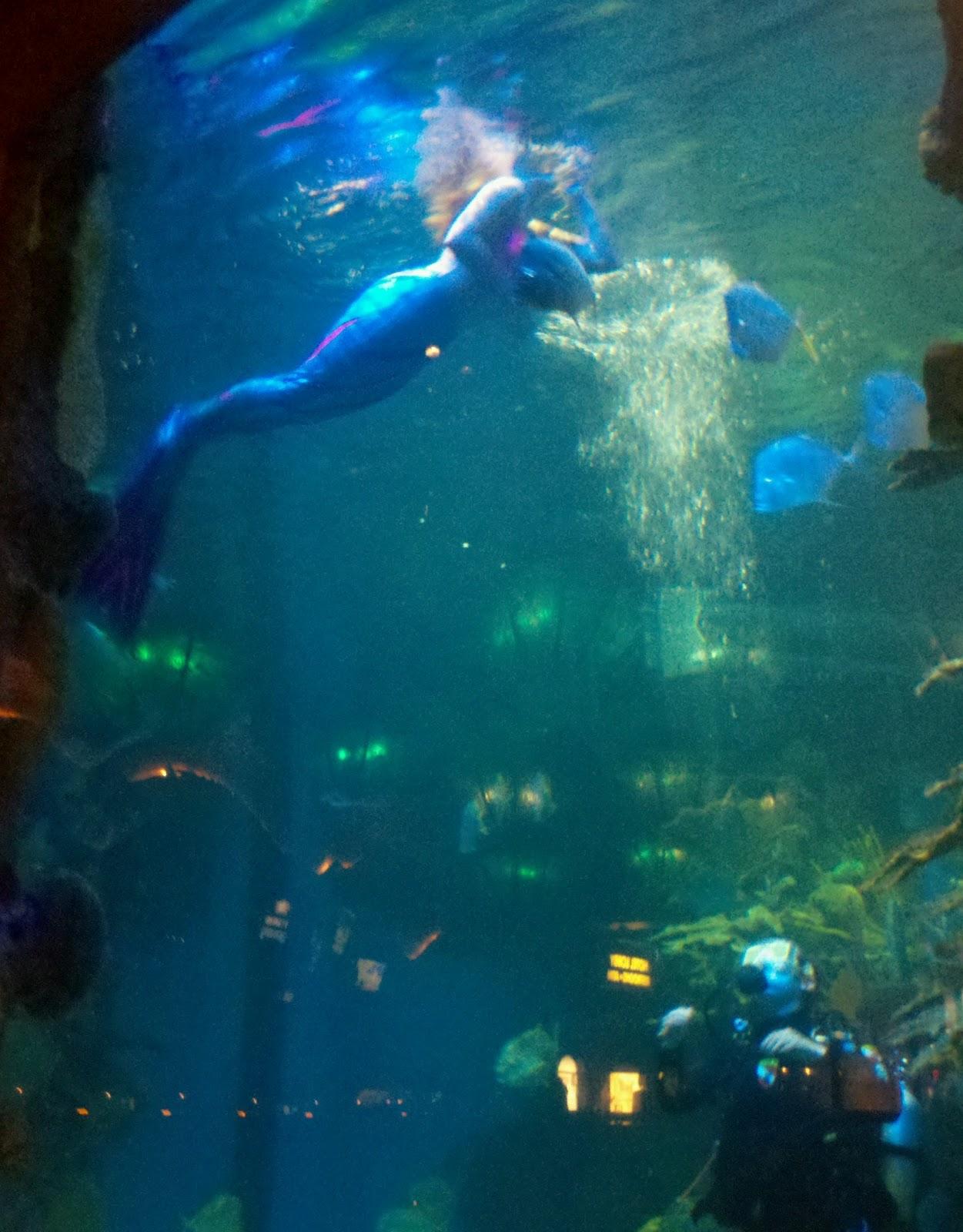 real mermaids underwater wwwimgkidcom the image kid