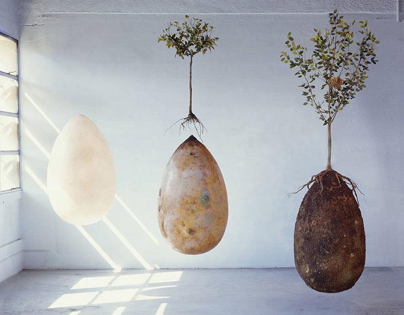 Estas vainas orgánicas funerarias convierten cementerio en un bosque