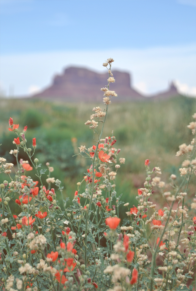 The Flying Clubhouse: U.S. Route 163 Through Monument Valley - globemallow