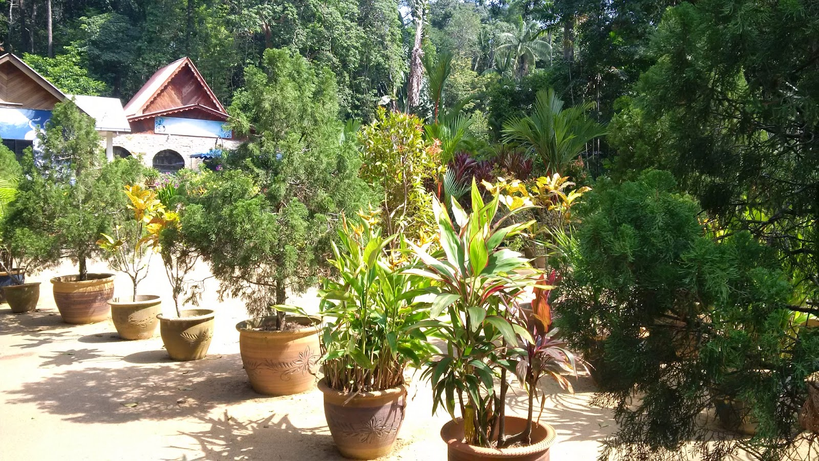 taman botanikal melaka, spieces fauna and floral, tourism, travel, orchids garden, bamboo garden, heliconia, herbal, taro, yam