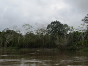 On the Amazon!