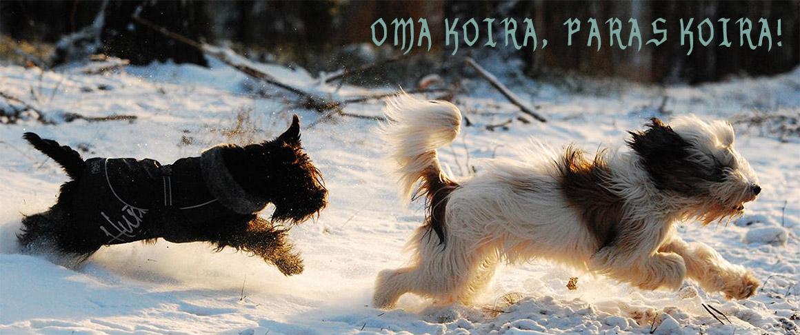 Oma koira, paras koira!