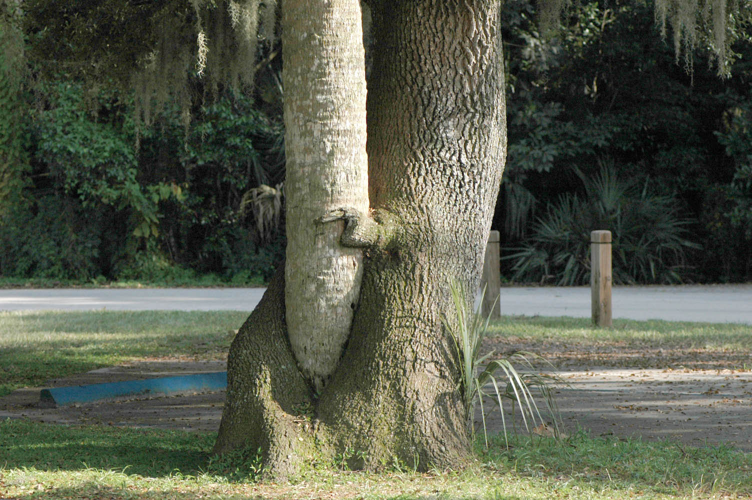 Фото секс в дерев смотреть онлайн фотоография