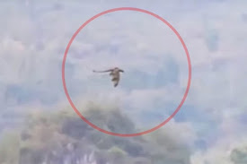 Dragon Flying over China ? (Video)