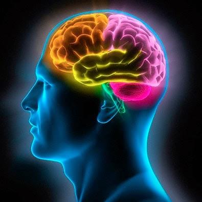 rostro humano de perfil destacando con colores lobulos del cerebro