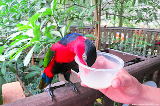 Feeding a lory in Jurong Bird Park