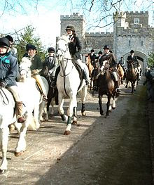 horses and ponies on fox hunt